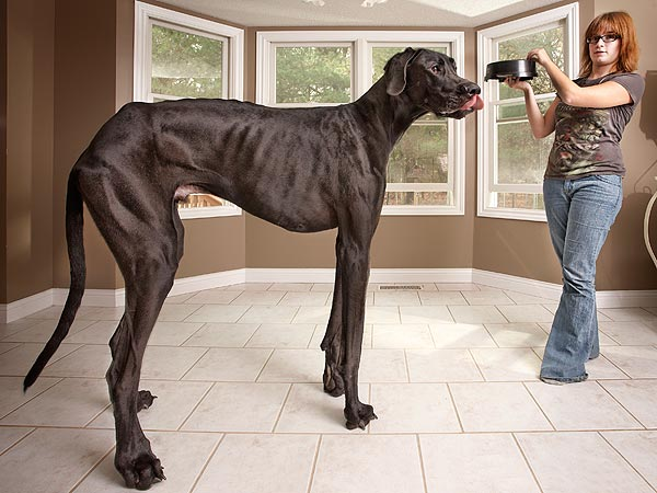world biggest dog 5